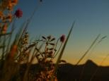 Der Sonne entgegen ... Kurzausflug auf das Pfrondhorn