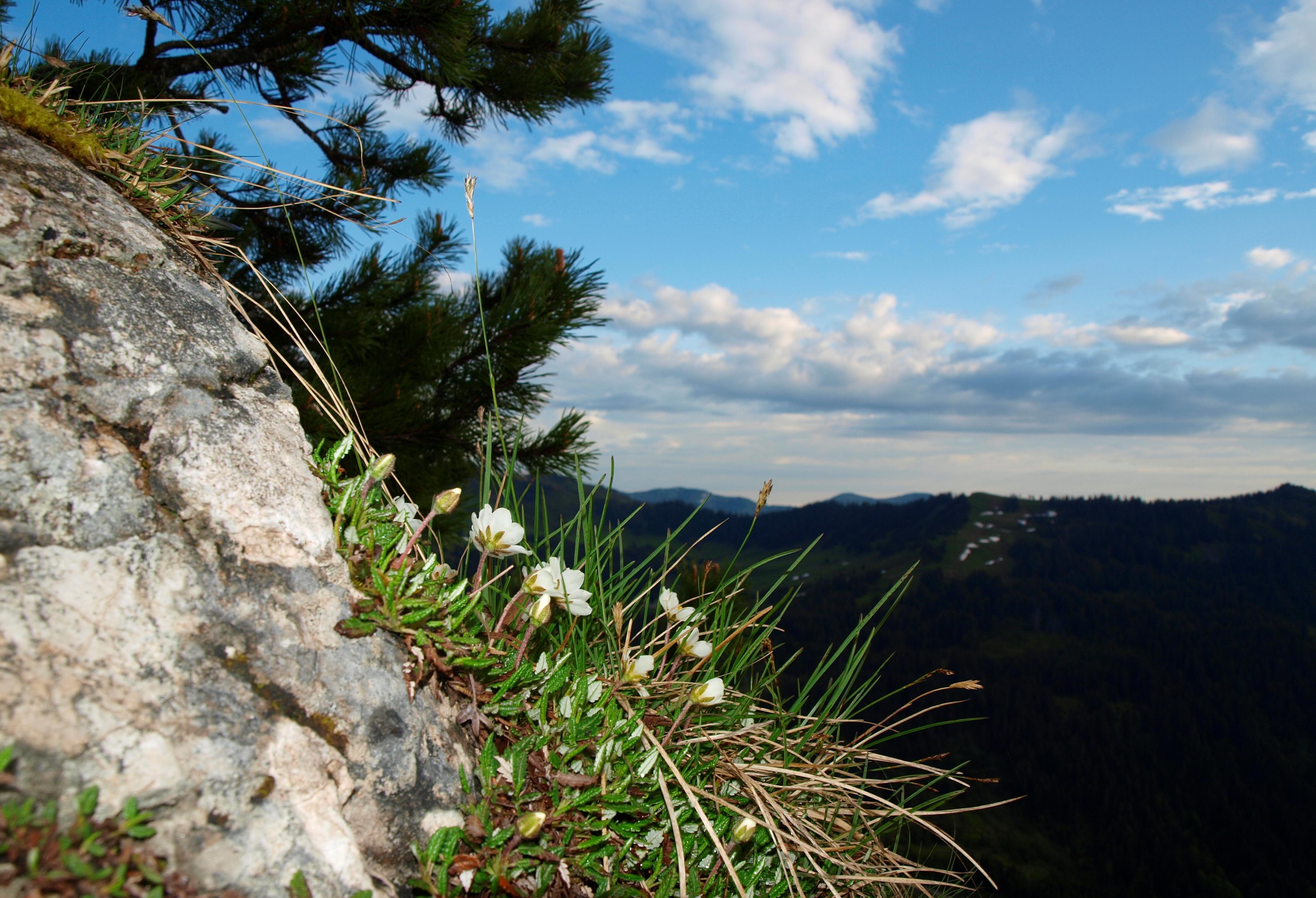 Klettersteig Besler : Besler und beslerkopf u eine herrliche rundtour auf dem