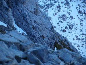Steiler Abstieg - Steinwild