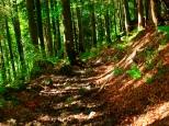 Hoch Häderich - Waldweg