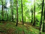 Herrliche Waldlandschaft