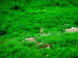 Paradies der Murmeltiere
