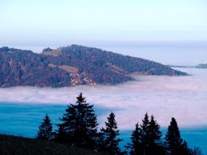 Winterstaude - hoch über der Nebelgrenze