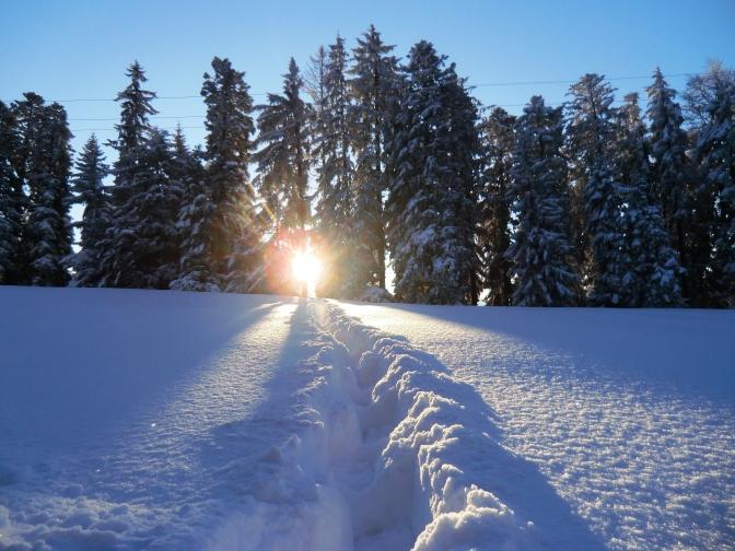 5 schöne Schneeschuhtouren auf und um den Pfänder